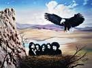eagles-218068.jpg